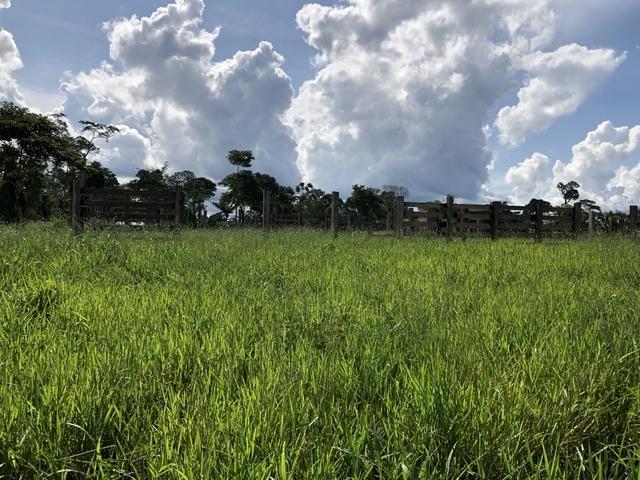 Fazenda Medindo 257,00 ha (Documentada, Apta a fazer financiamentos) - Foto 5