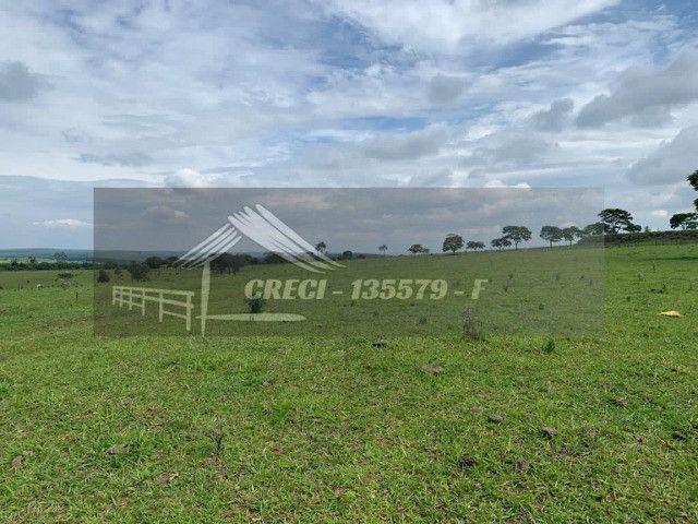 Fazenda com 234 hectares (Nogueira Imóveis Rurais) - Foto 8