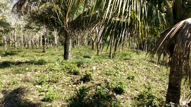 Imóvel rural no interior da Bahia.  - Foto 8