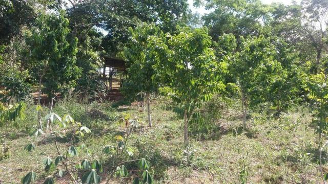 Cidade ilhéus região Japu, Sitio 72 hectares - Foto 20