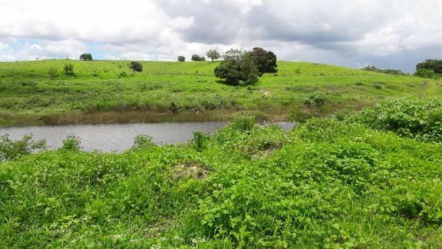 Fazenda com 170 hectares na região de monte alegre - Foto 15