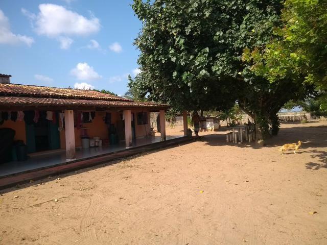Excelente Sítio na Zona Rural de São José de Mipibu - Foto 3