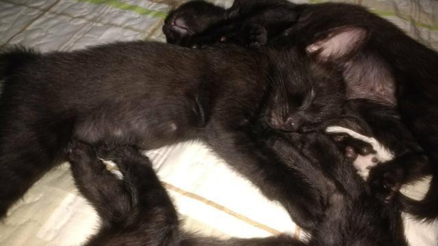 Doação . Gatos pretos lindos!
