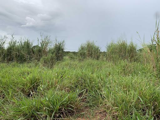 Sítio 31 ha. acorizal beira do rio - Foto 6