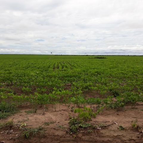 Fazenda centro sul do Maranhão - Foto 2