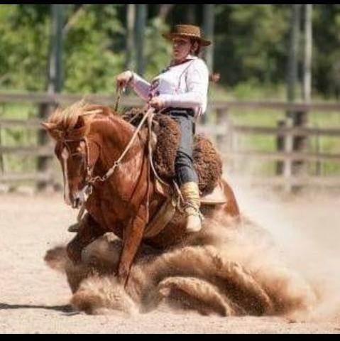 Cavalo Crioulo Inteiro Confirmado - Foto 3