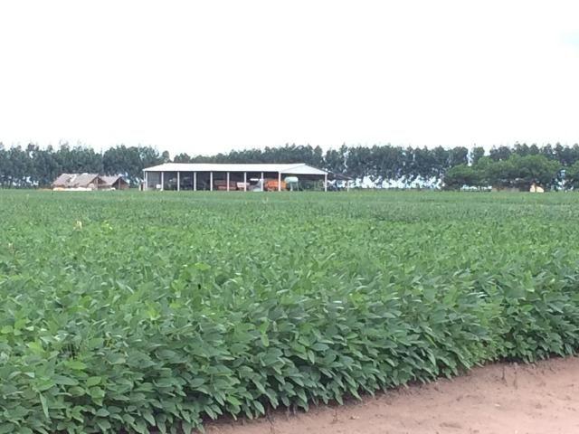 Fazenda em Uruçui Piauí - Foto 3