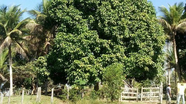 Imóvel rural no interior da Bahia.  - Foto 6