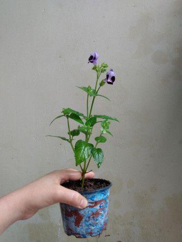Vendo essa linda florzinha  - Foto 3