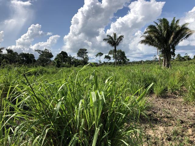 Fazenda Medindo 257,00 ha (Documentada, Apta a fazer financiamentos) - Foto 8