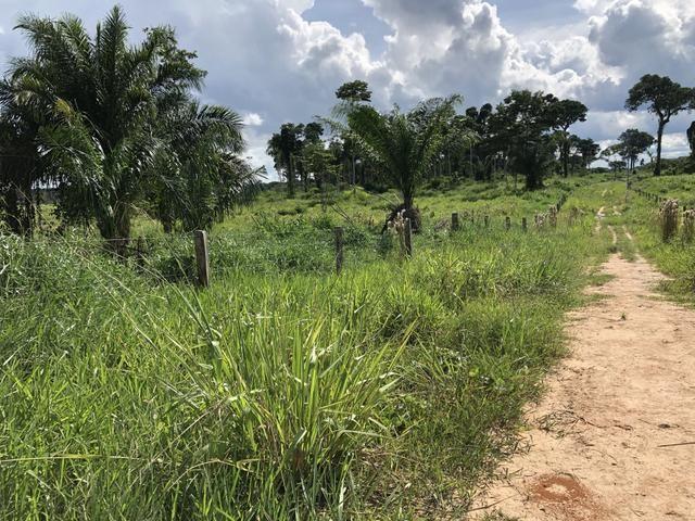Fazenda Medindo 257,00 ha (Documentada, Apta a fazer financiamentos) - Foto 9