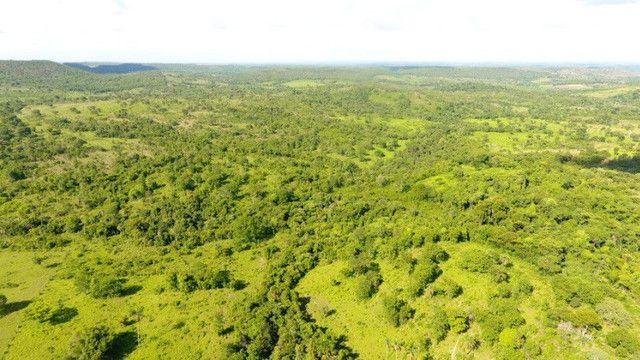 Fazenda com 561 há (116 alq) maior valorização pecuarista próximo a capital - Foto 11