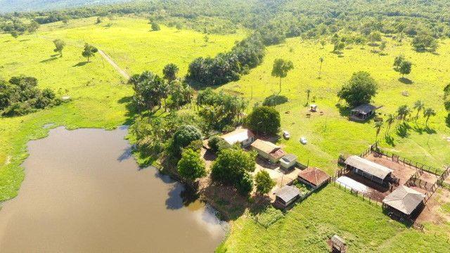 Fazenda com 561 há (116 alq) maior valorização pecuarista próximo a capital