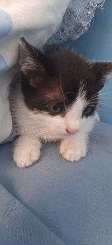 Doação gatinha