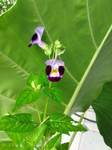 Vendo essas plantas de diferentes espécies
