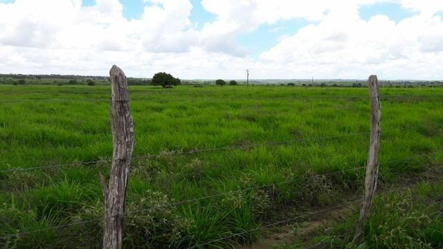 Fazenda com 170 hectares na região de monte alegre - Foto 12