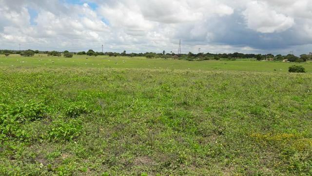 Fazenda com 170 hectares na região de monte alegre - Foto 16