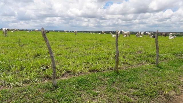 Fazenda com 170 hectares na região de monte alegre - Foto 9
