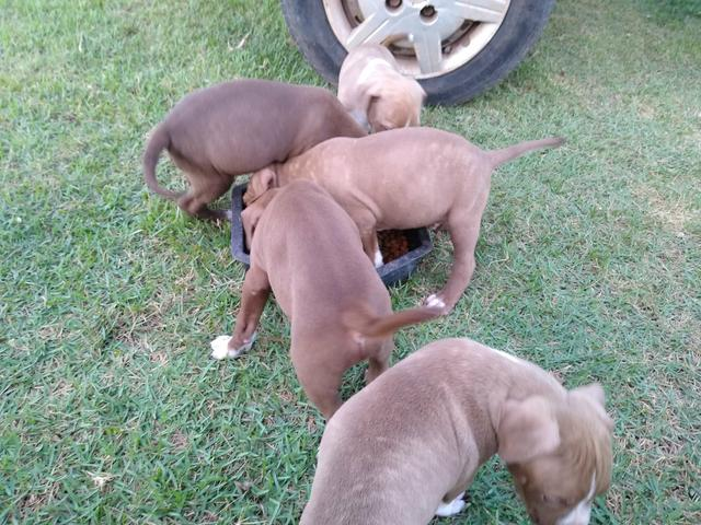 Filhos de Pitbull Monsters
