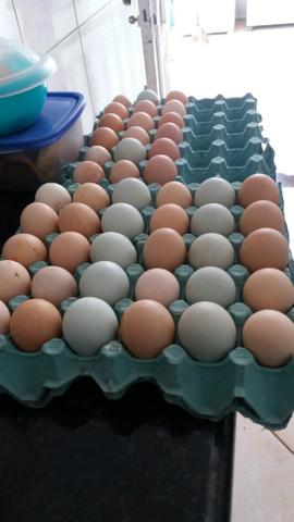 Tenho pra hoje 3 duzias de ovos de indio gigante verdadeiro