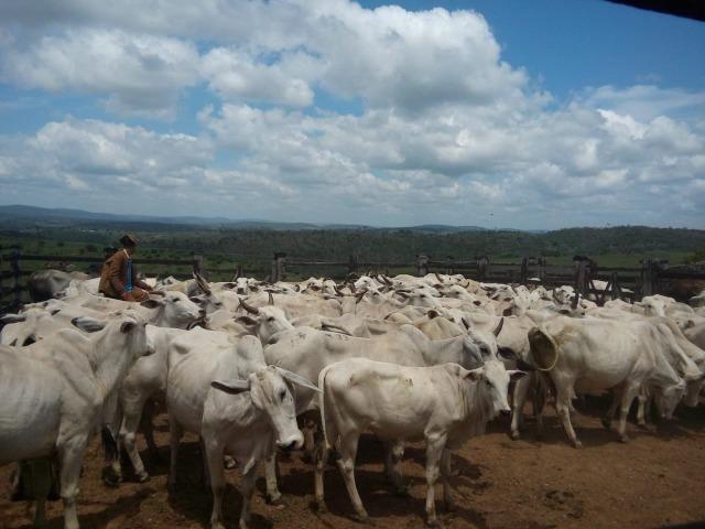 Mundo Novo Fazenda - Foto 10