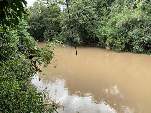 Sítio 31 ha. acorizal beira do rio - Foto 7