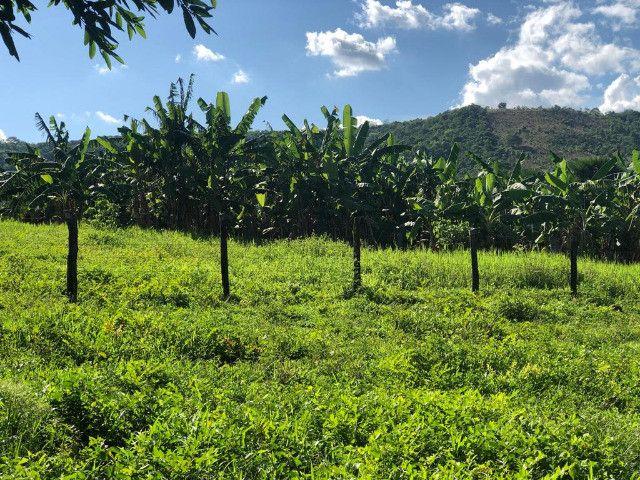 Fazenda com 561 há (116 alq) maior valorização pecuarista próximo a capital - Foto 12