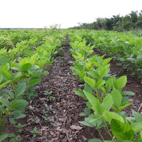 Fazenda centro sul do Maranhão - Foto 3