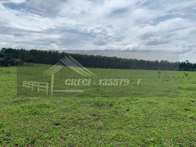 Fazenda com 234 hectares (Nogueira Imóveis Rurais) - Foto 7