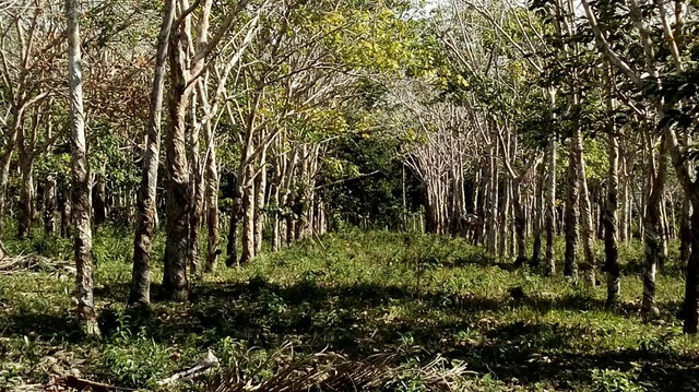 Imóvel rural no interior da Bahia.  - Foto 14