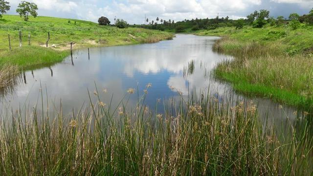 Fazenda com 170 hectares na região de monte alegre - Foto 6