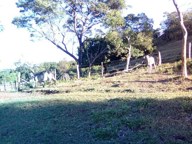 Vendo-Troco Sítio (área de terra rural) entre Leópolis e Cornélio Procópio PR - Foto 4