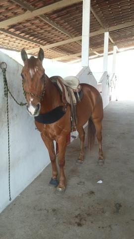 Cavalo pronto de Direita