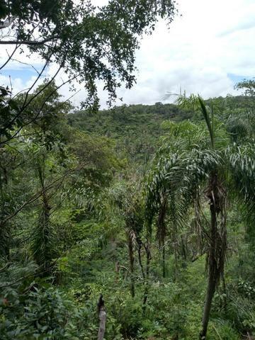 Propriedade Rural de 576 hectares de Mata e Cerrado no Piauí - Foto 4