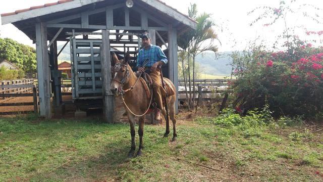 Fazenda Agricultura e Pecuária-Completa Arrendamento - Foto 14