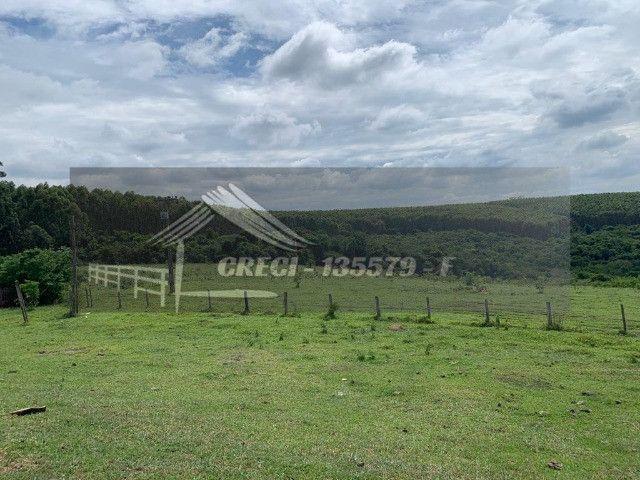 Fazenda com 234 hectares (Nogueira Imóveis Rurais) - Foto 15