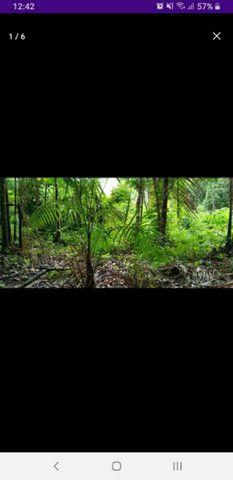 Terreno no rio tumuacar - Foto 3