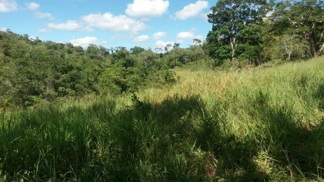 Cidade ilhéus região Japu, Sitio 72 hectares - Foto 6