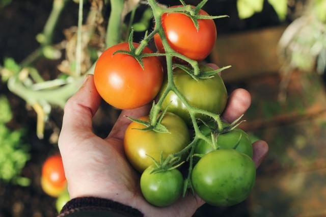 Horta orgânica - Aprenda a fazer na sua própria casa! - Foto 2