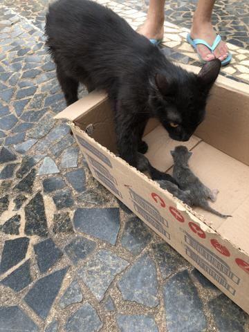 Procura-se lar para Gatos - Foto 2