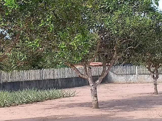 Excelente Sítio na Zona Rural de São José de Mipibu - Foto 6