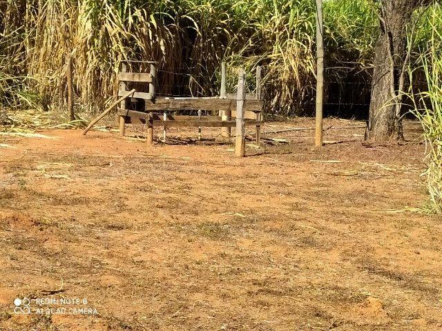 Fazenda 39 hectares - Foto 5