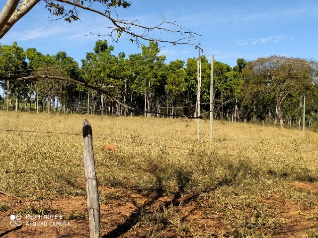 Fazenda 39 hectares - Foto 4