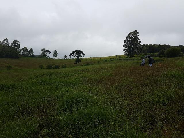 193B/Ótima fazenda de 70 ha bem localizada com ótima altitude e topografia - Foto 3