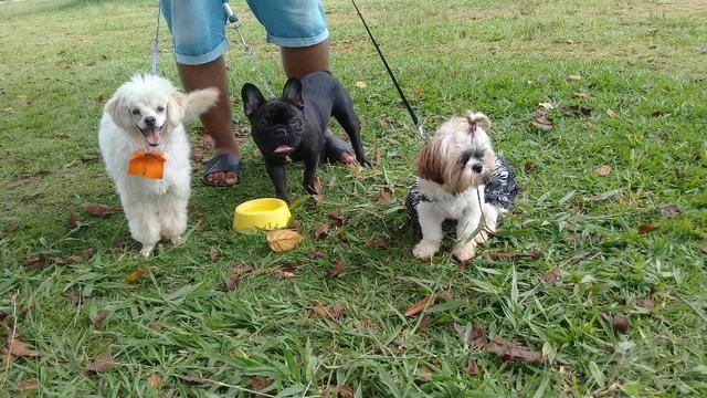 Hospedagem/ Dog Walker/ Pet Sitter Para Cachorros