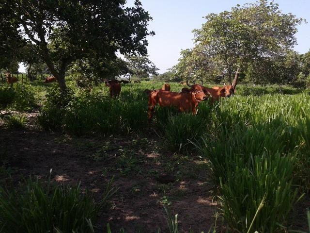 Granja com 8,8 há, duas casas, 2 poços, muito pasto, perto da reta tabajara - Foto 18