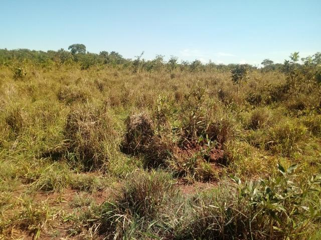 Chácara de 39 hectares em Acorizal ! - Foto 4
