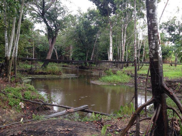 Vendendo terreno de 5 hectares em Parintins - Foto 4