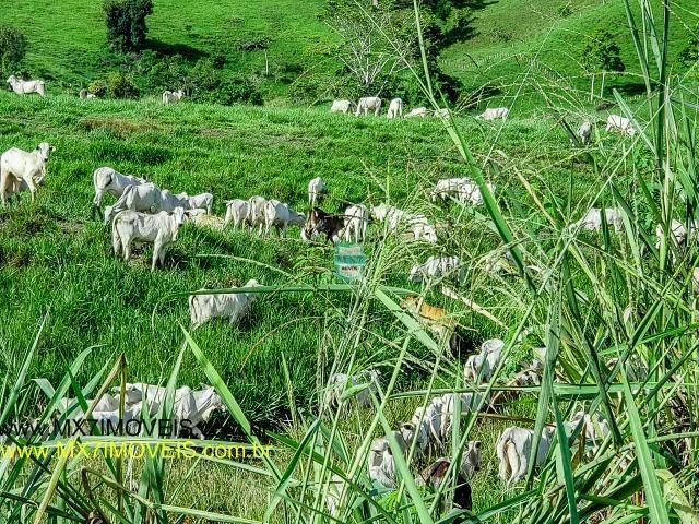 Itaju do Colônia. Linda Fazenda pecuária de 375 Hectares - Foto 3