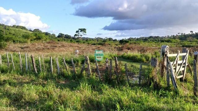 Itagibá. Fazenda pecuária de 375 Hectares com toda infraestrutura. - Foto 4
